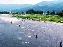 魚野川鮎釣
